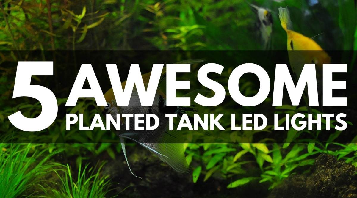 5 Best Led Light Fixtures For Your Planted Tank 2020 Updated Guide