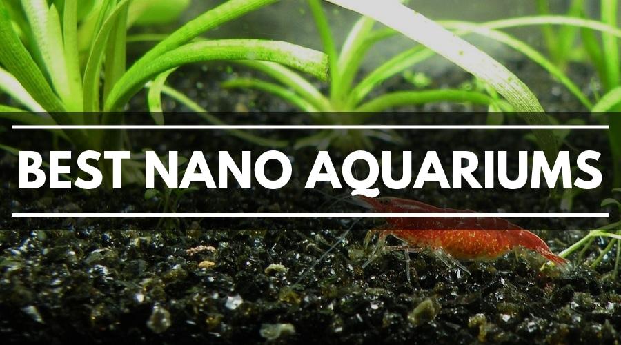 best nano aquariums