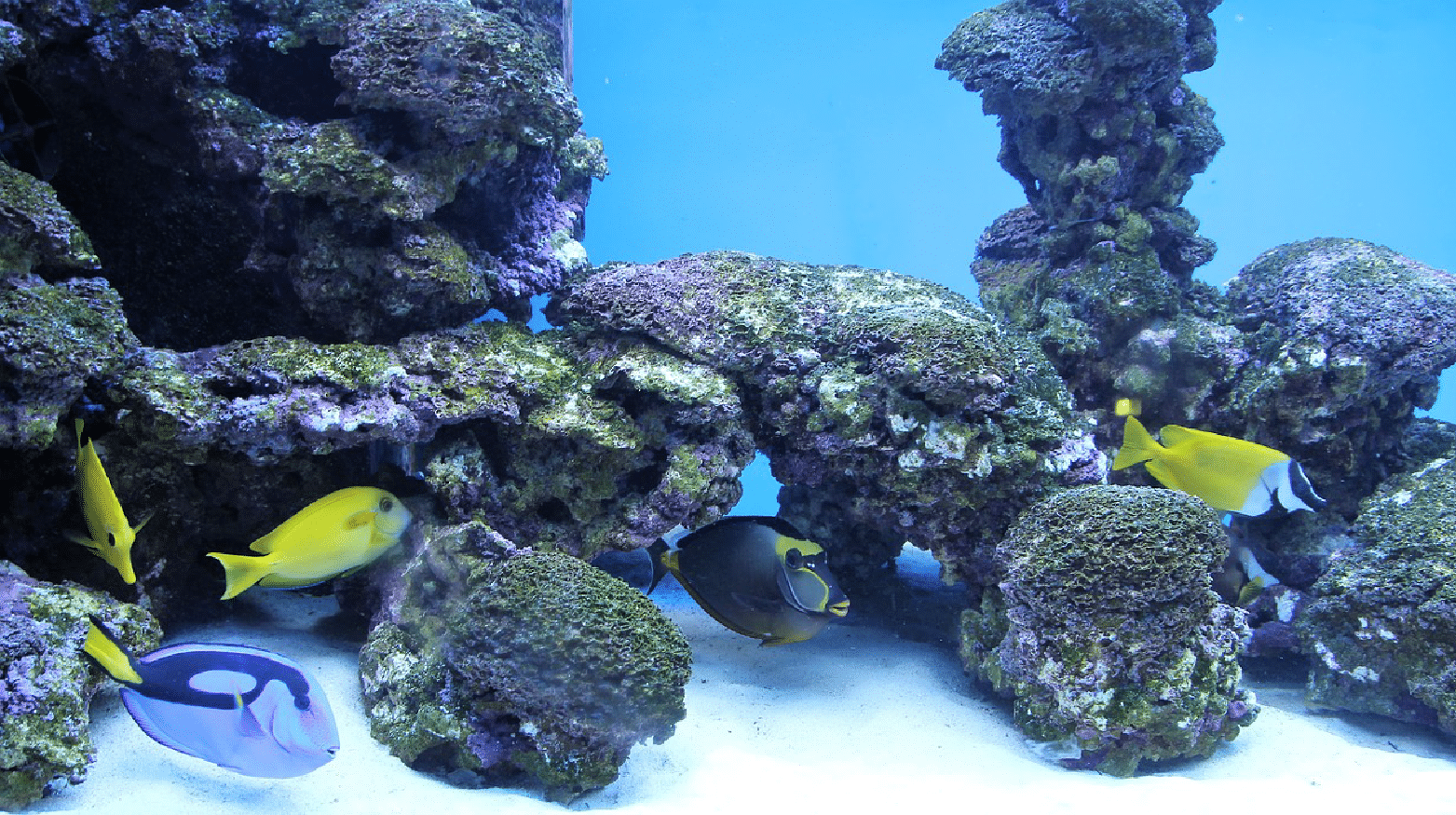 saltwater tank with powerheads
