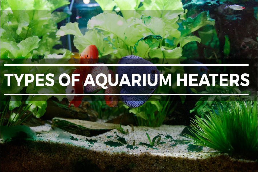 TYPES OF AQUARIUM HEATERS