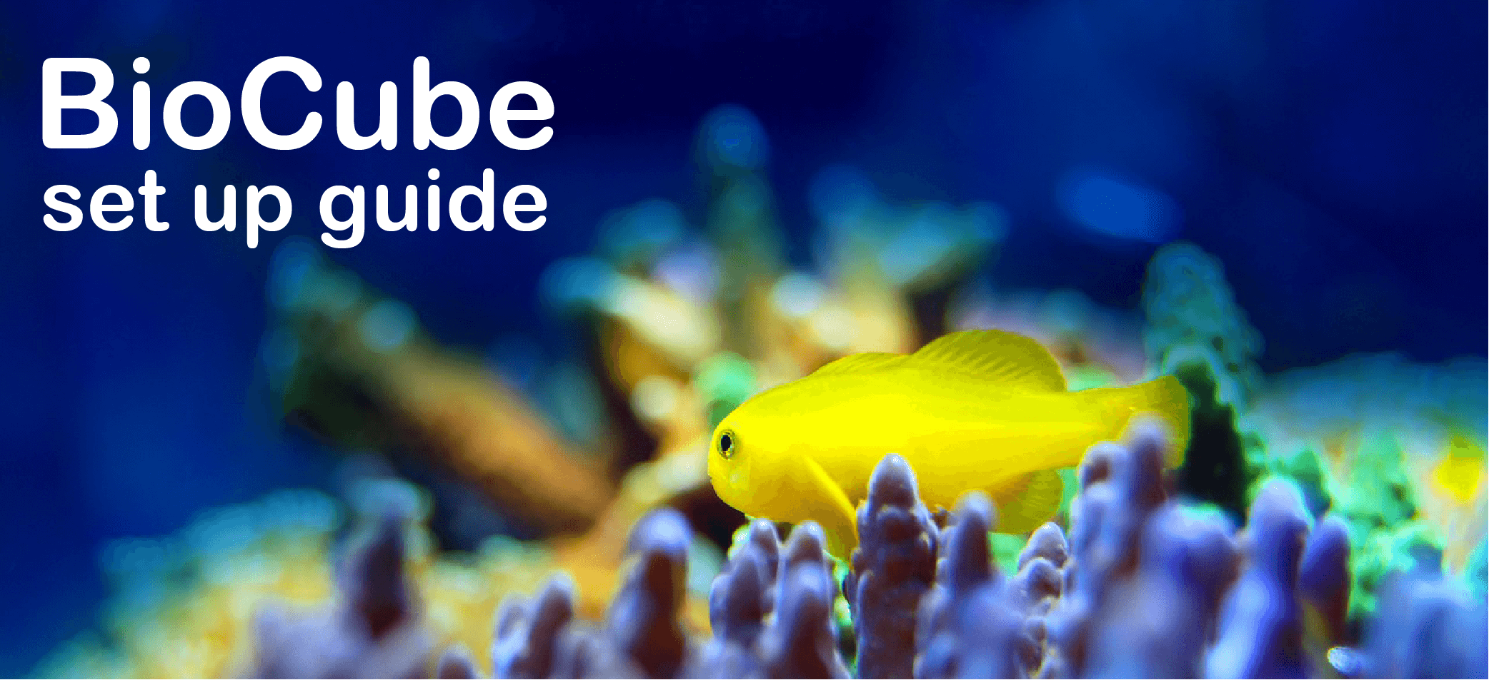 biocube set up guide