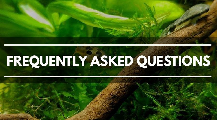 Aquarium substrate FAQs