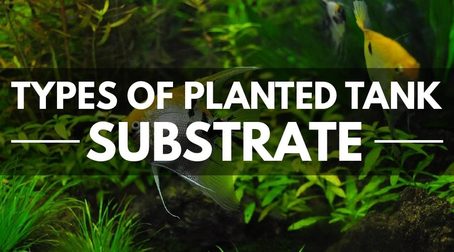 types of planted aquarium substrate