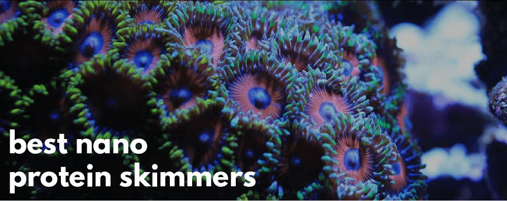 best nano protein skimmer