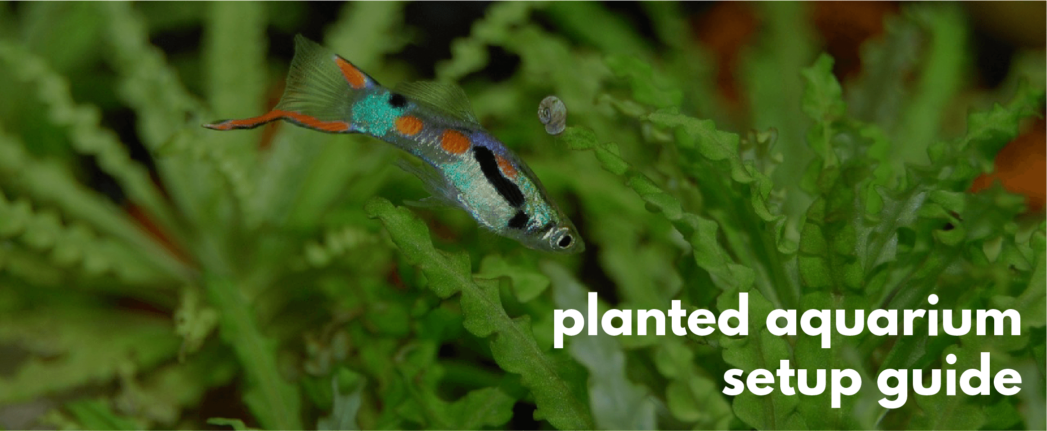 setting up a planted aquarium step by step beginners guide