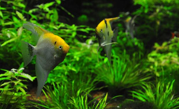 25 Easy Low Light Aquarium Plants for Beginners (Freshwater Guide)