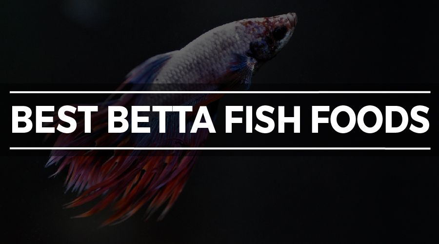 BEST BETTA FOOD
