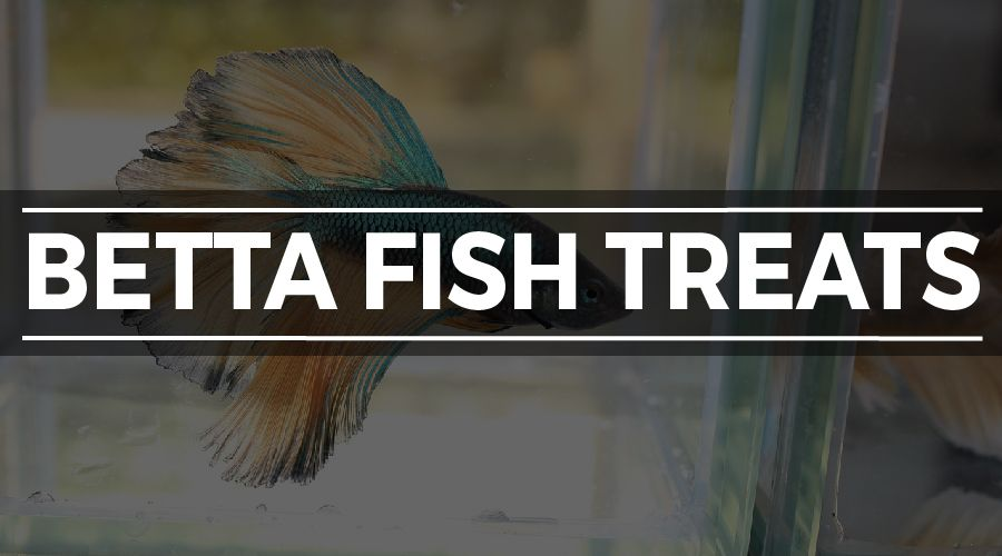 BETTA FISH TREATS