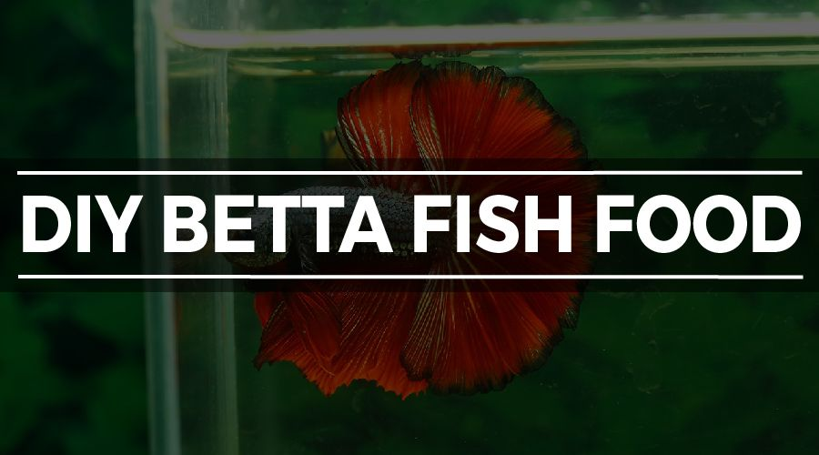 DIY BETTA FOOD