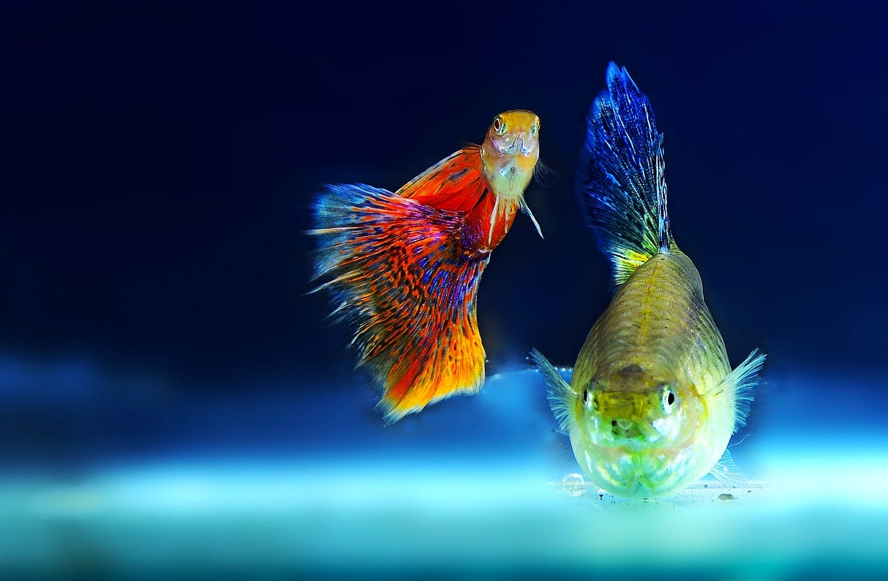 12 Compatible Molly Fish Tank Mates With Pictures Bya