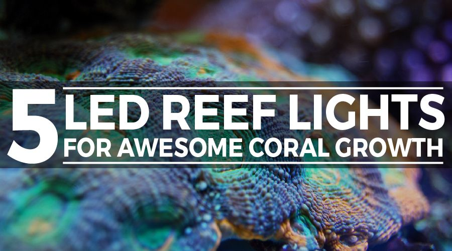 led reef lighting