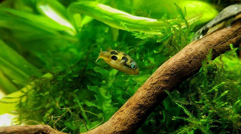 10 Small Freshwater Fish For Nano Aquariums The Ultimate Guide