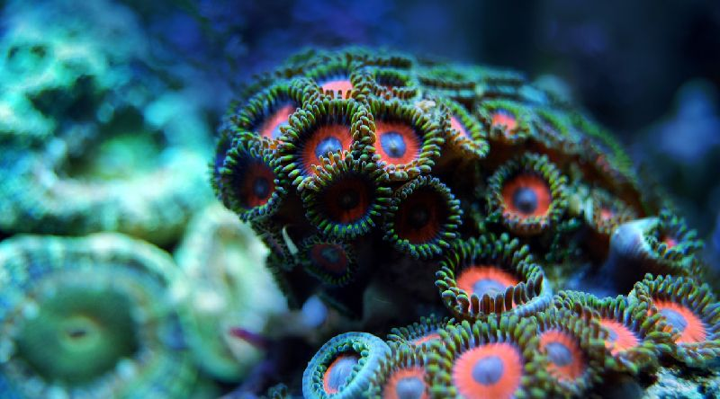 5 best led reef lights for optimal coral growth review guide