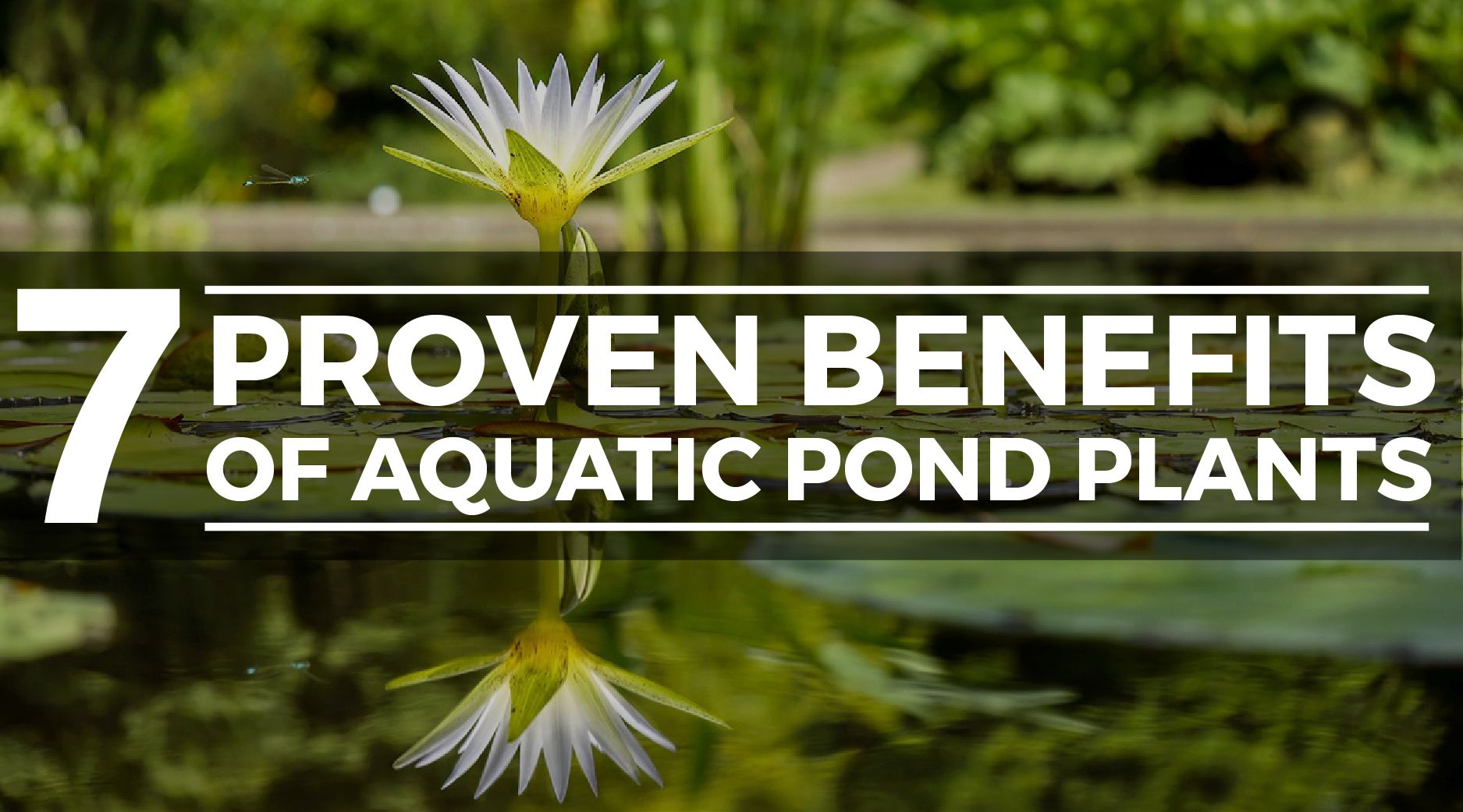 pond plant benefits