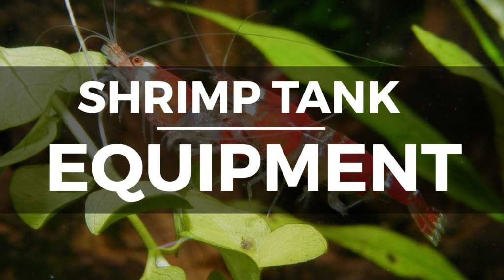 shrimp tank equipment