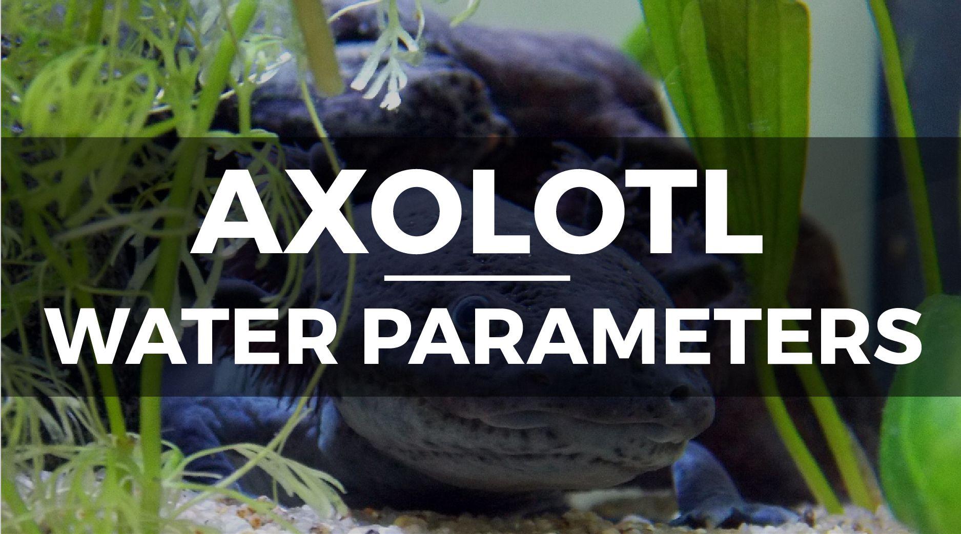 axolotl tank water parameters