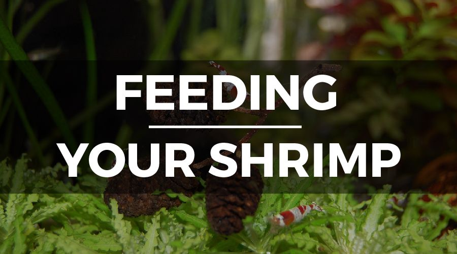 freshwater shrimp diet