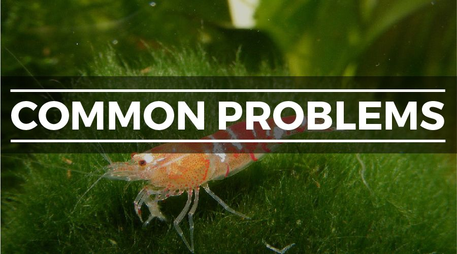 How to Set Up a Freshwater Shrimp Tank: Complete Step-by