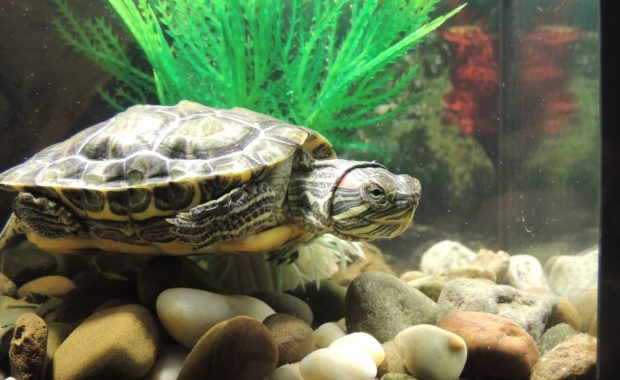 Turtle Lighting: How to Set up the Perfect Light System for Your Turtle Tank
