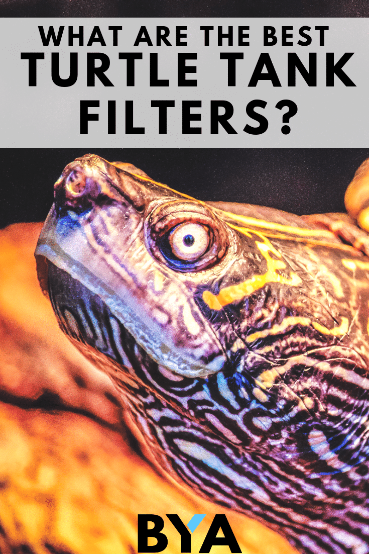 Turtle tank filters