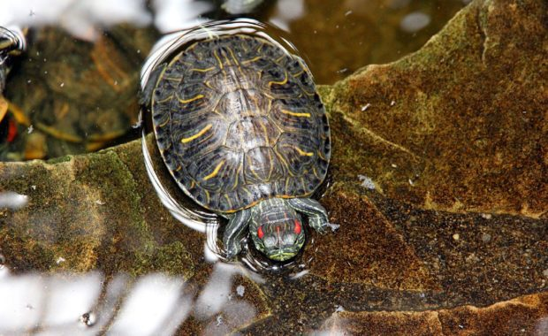 7 Awesome Turtle Tank Heaters: The Complete Buyer's Review Guide