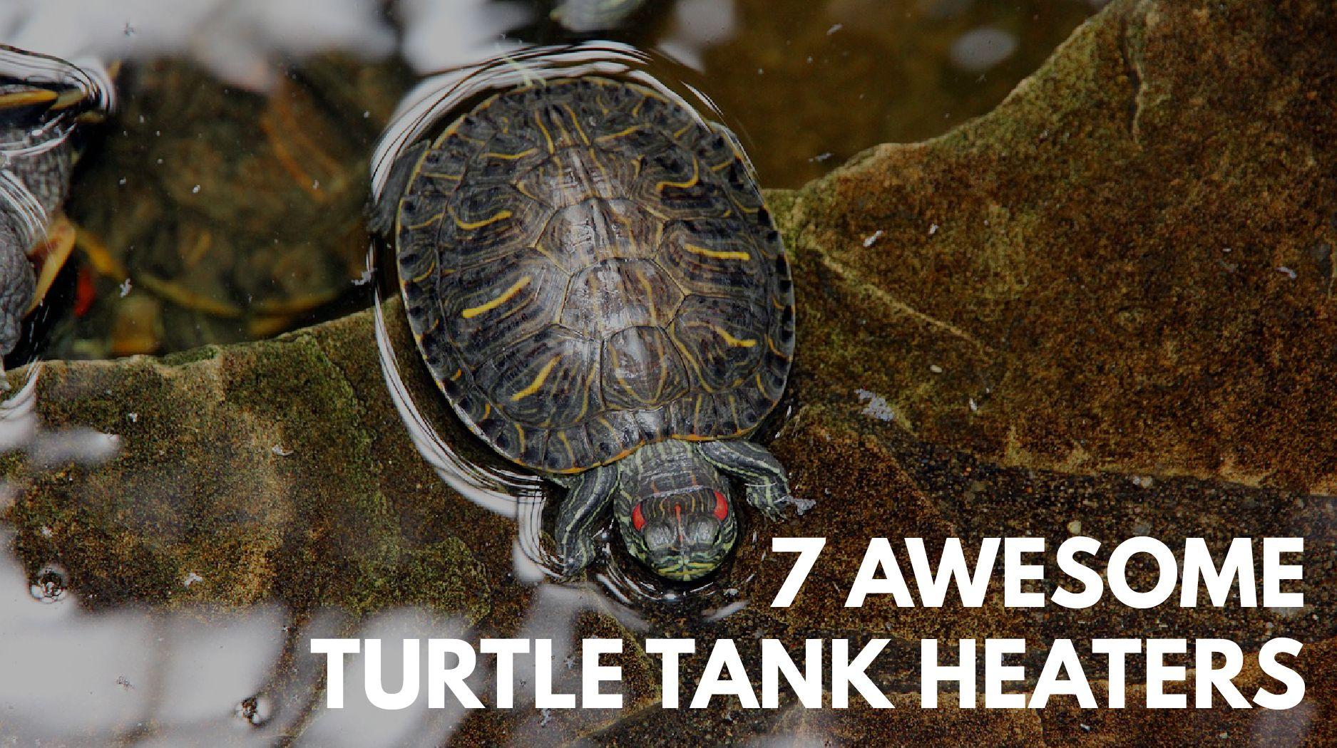 turtle tank heater