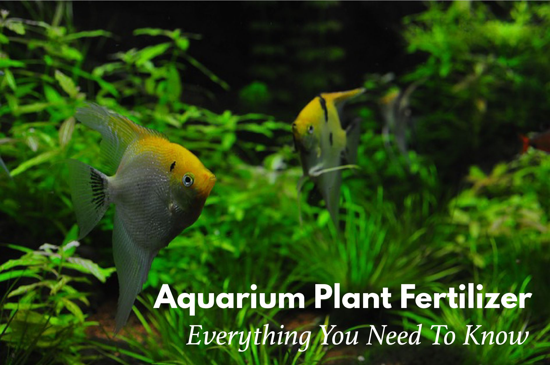 aquarium plant fertilizer