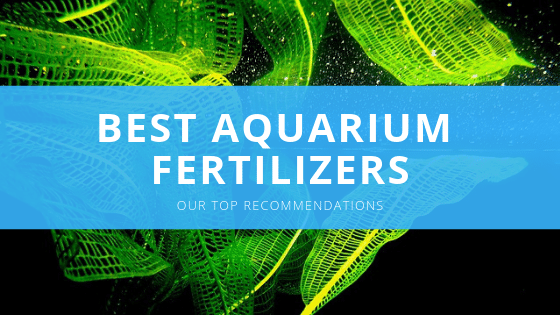 best aquarium plant fertilizer