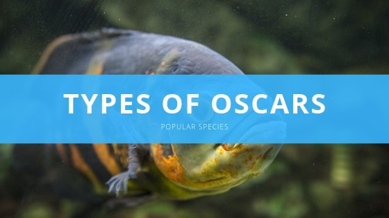 oscar species