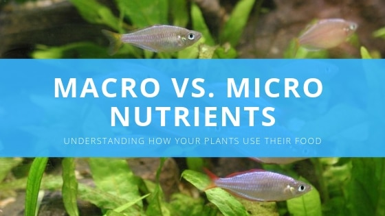 aquarium plant nutrients