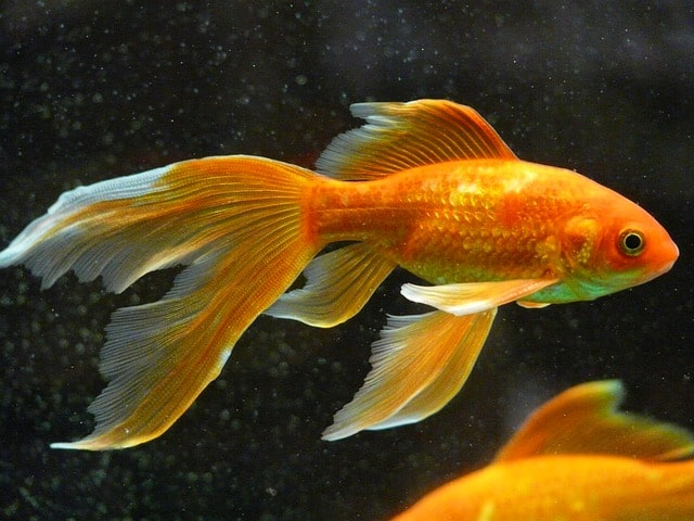 25 Most Beautiful Fish In The World With Pictures Build Your Aquarium