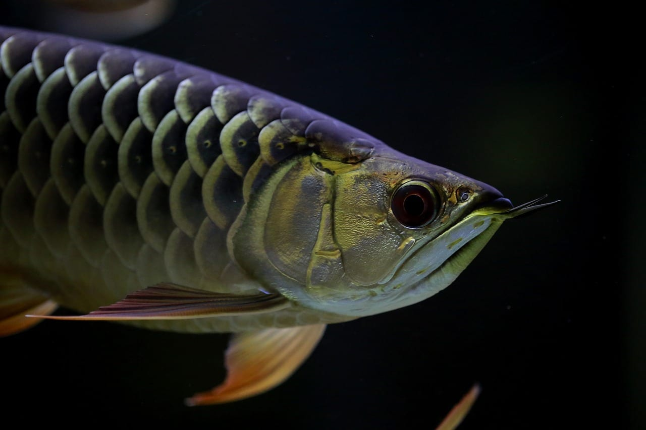 13 Cool Exotic Freshwater Fish That