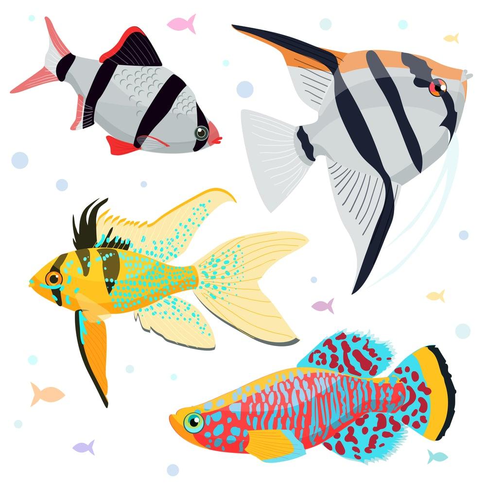 aquarium fish illustrations