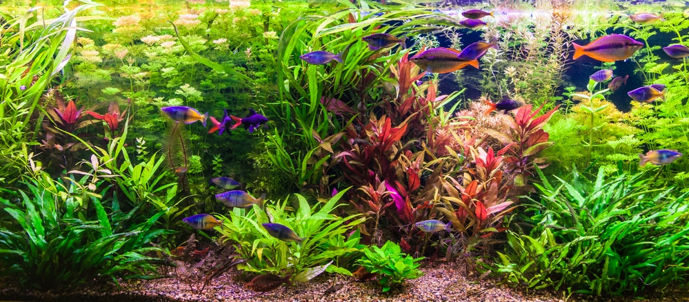 dutch style aquascape with aquatic plant