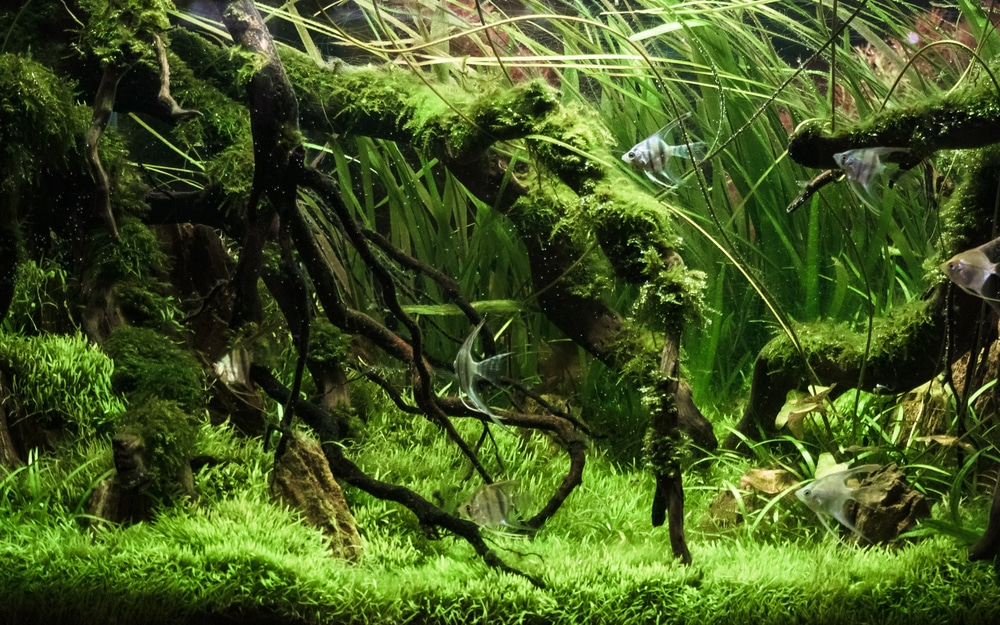 The Ultimate Beginner's Guide to Aquascaping Your Aquarium