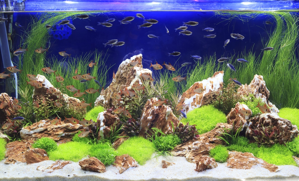 aquascape with rocks
