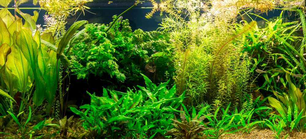 freshwater fish tank with aquarium plants