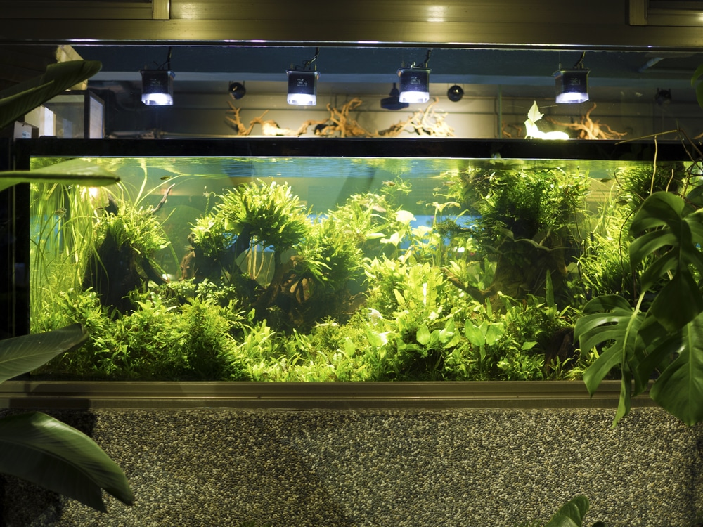 The Ultimate Beginner S Guide To Aquascaping Your Aquarium