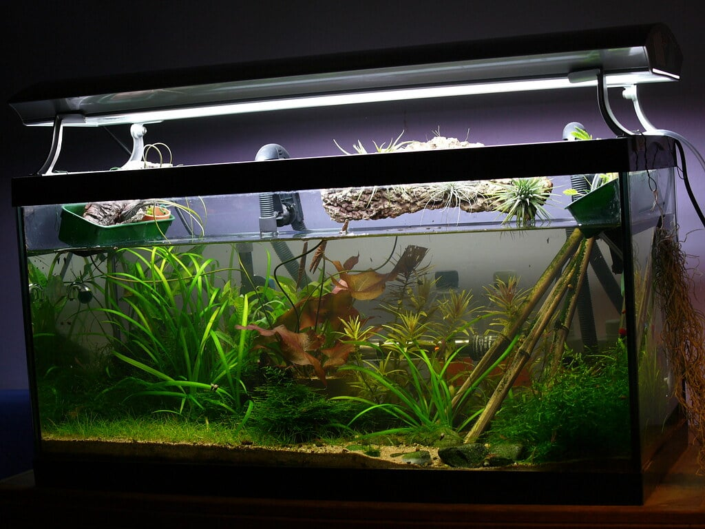 planted aquarium with LED light