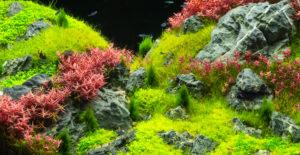 aquarium carpet plants