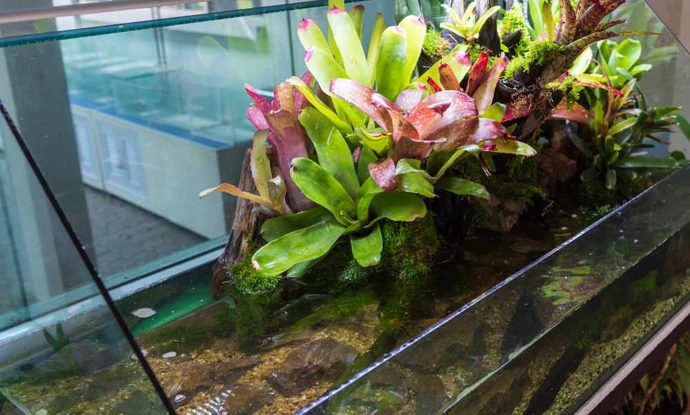 Paludarium Plants Tank