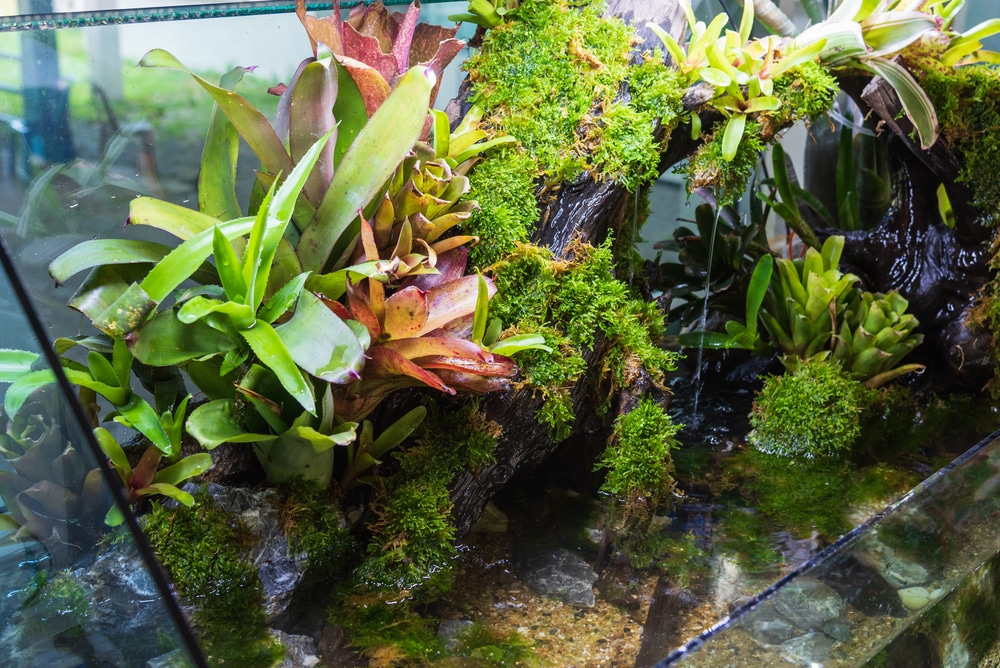 paludarium tank with plants