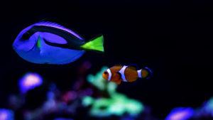 saltwater aquarium fish