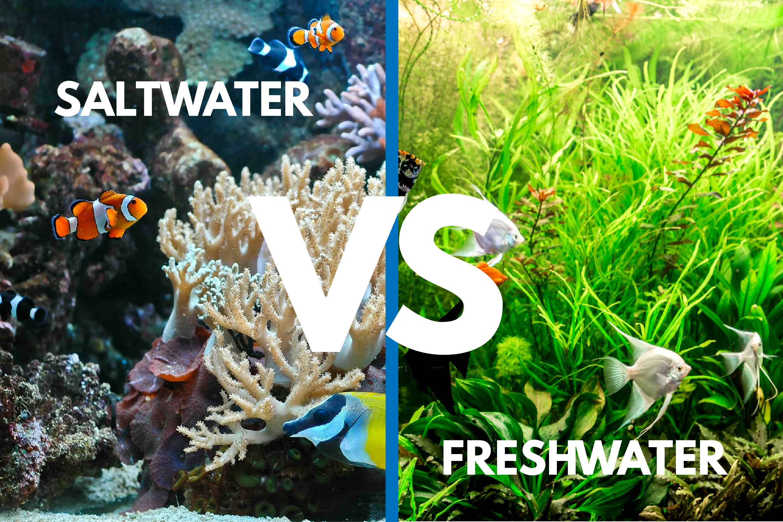 saltwater vs freshwater aquarium