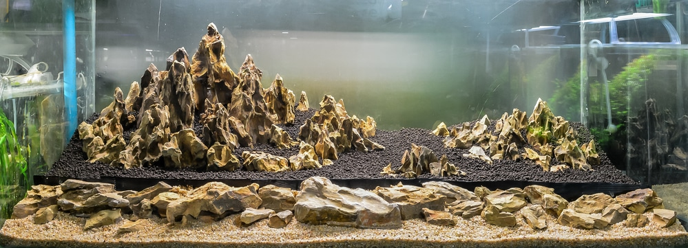 Seiryu Stone For Aquariums Everything You Should Know
