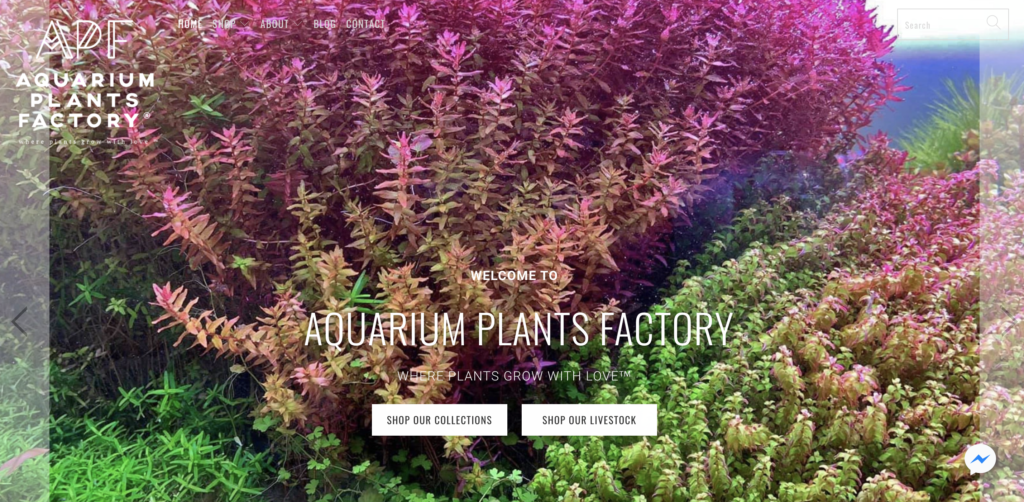 aquarium plants factory