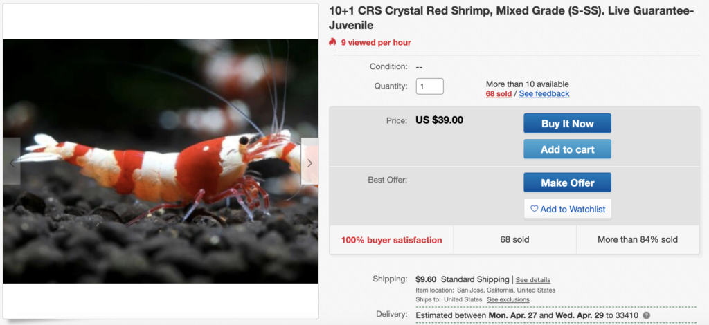 live crystal red shrimp on ebay