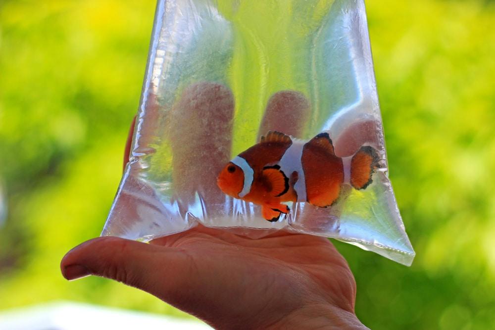 aquarium fish in bag