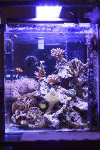 Nano Saltwater Aquarium