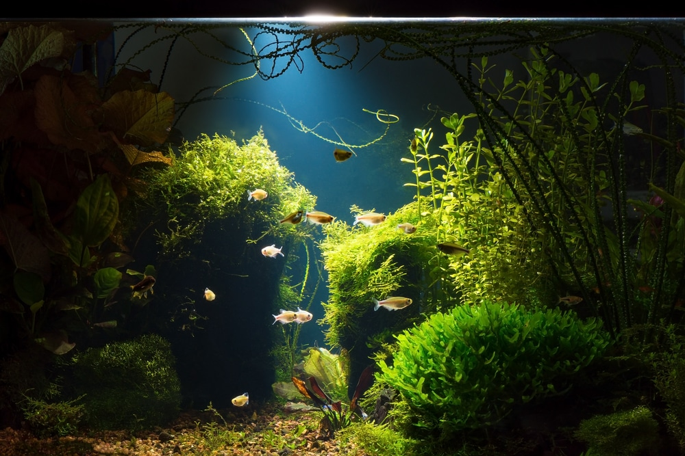 aquarium night lighting